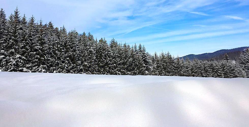 Urlaub im Bayerwald